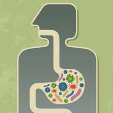 Gut microbiome from Scientific American